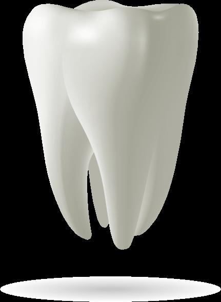 tooth model Brownstown, MI
