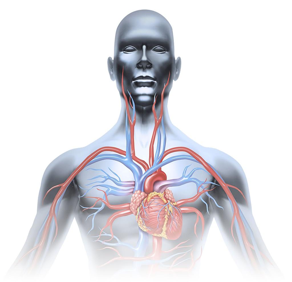 Total body wellness illustration