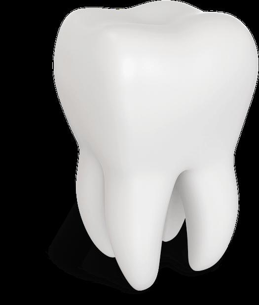 tooth model Tavares, FL