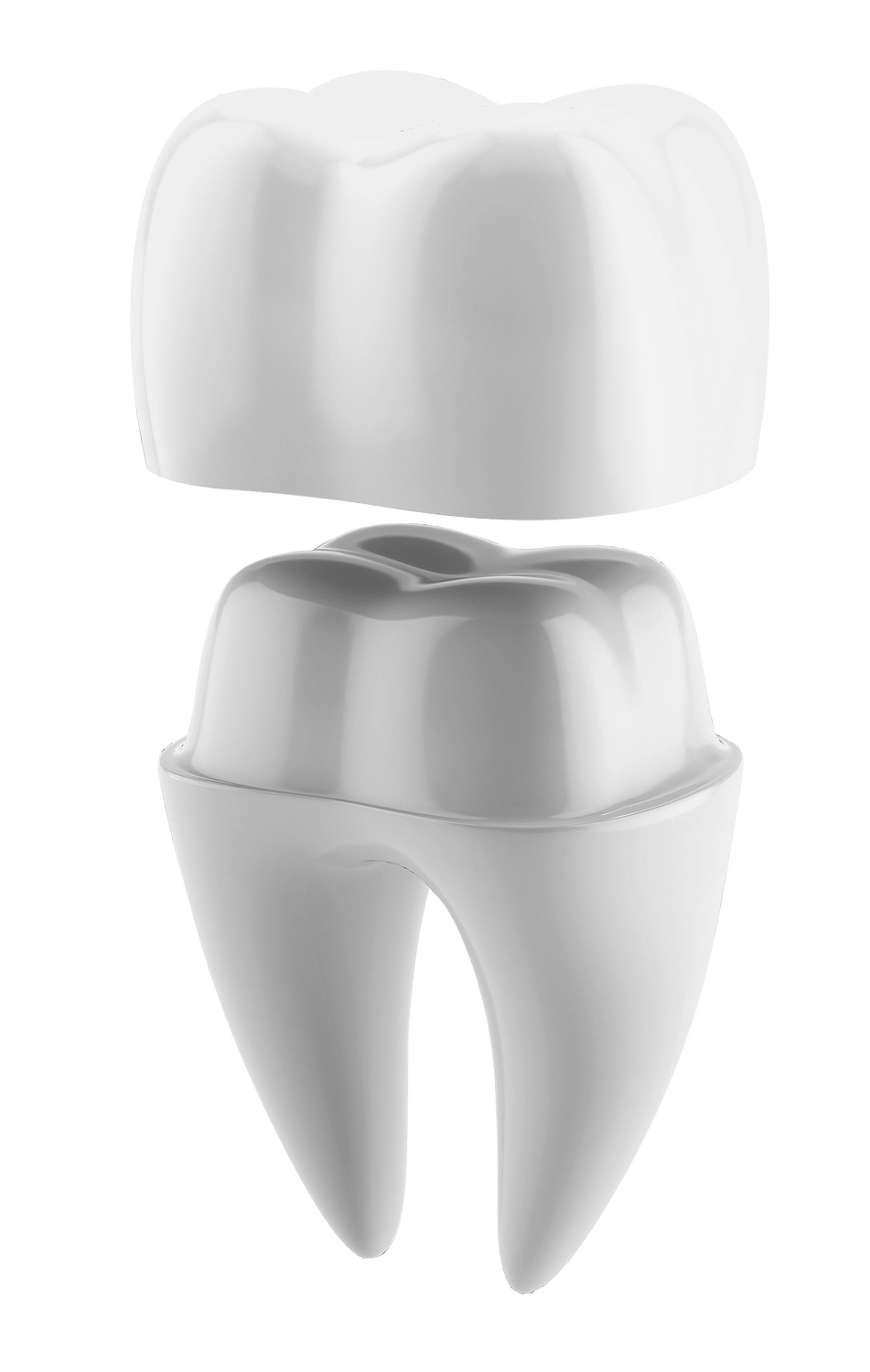 dental crown model MONTCLAIR, NJ