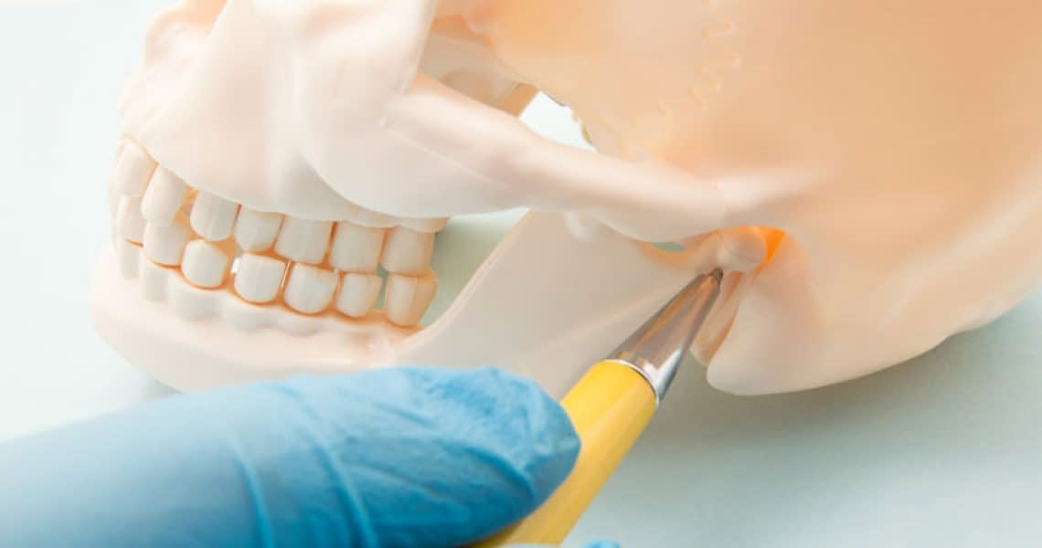 TMJ Jaw Bone Joint