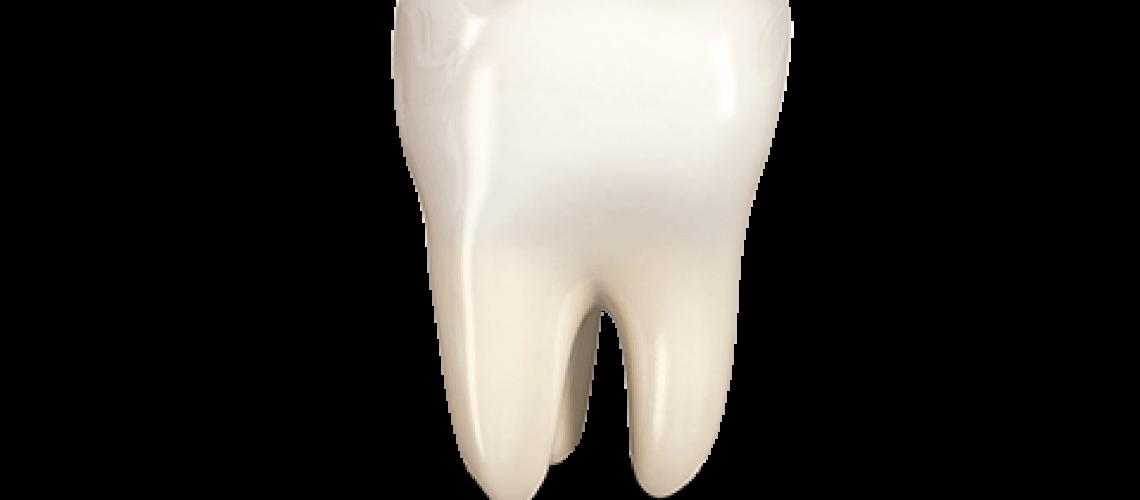 tooth_menu